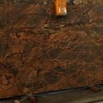 Rain Forest Brown 2cm K10 123x63.