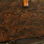 Rain Forest brown 2cm K10 123x63